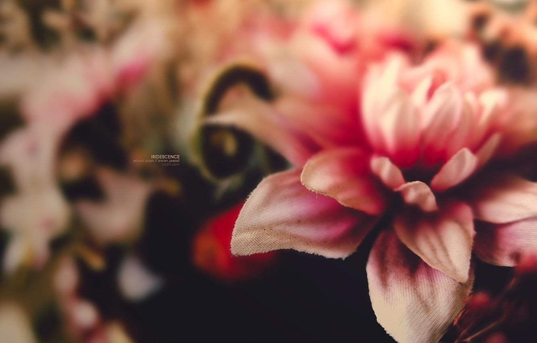 Photo wallpaper flower, macro, microsemi, pink