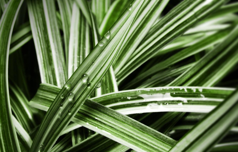 Photo wallpaper grass, Rosa, photo
