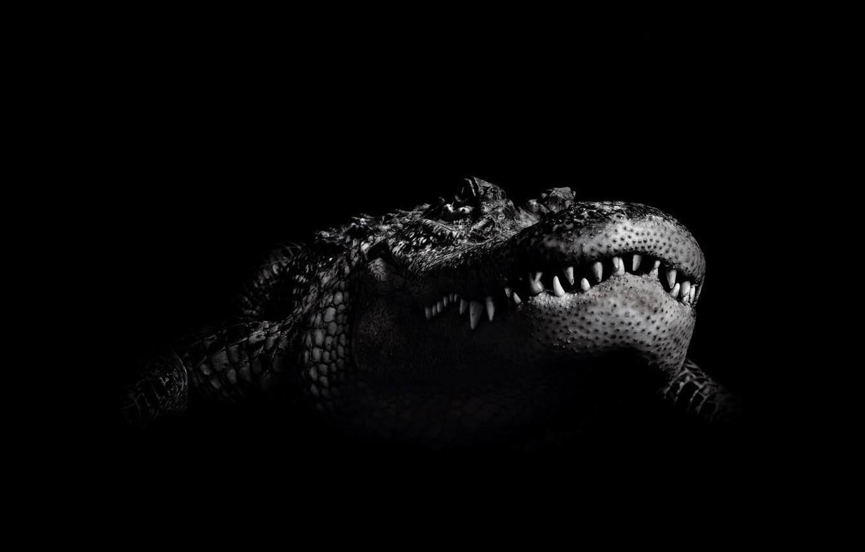 Wallpaper Black And White Crocodile Images For Desktop
