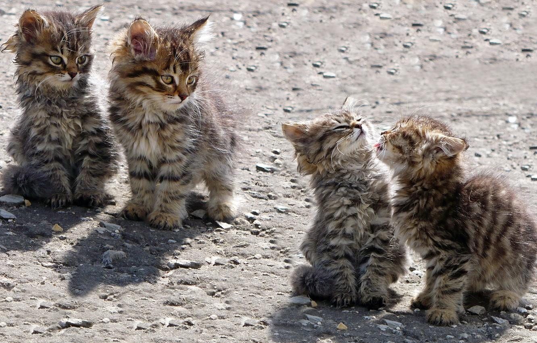 Photo wallpaper kittens, play, homeless