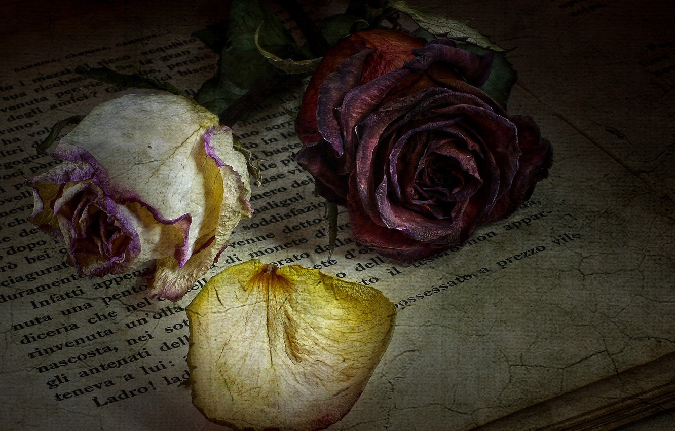 Photo wallpaper flowers, text, style, roses, book
