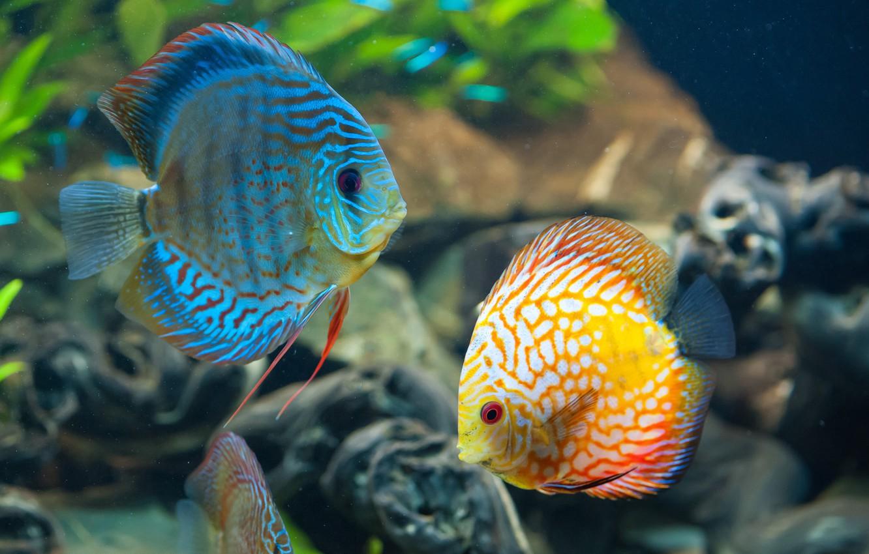 Photo wallpaper sea, the ocean, fish, beautiful, under water, underwater, sea, ocean, beautiful, fish, coral reef, coral …