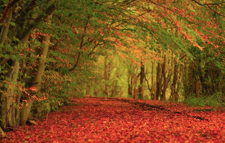 Photo wallpaper autumn, trees, nature, carpet, foliage