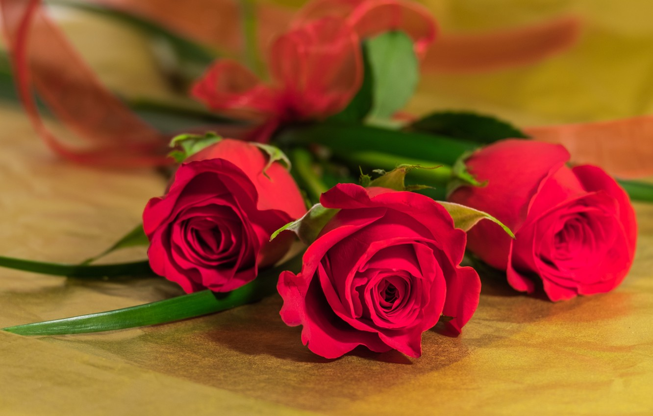 Photo wallpaper roses, bouquet, trio, buds