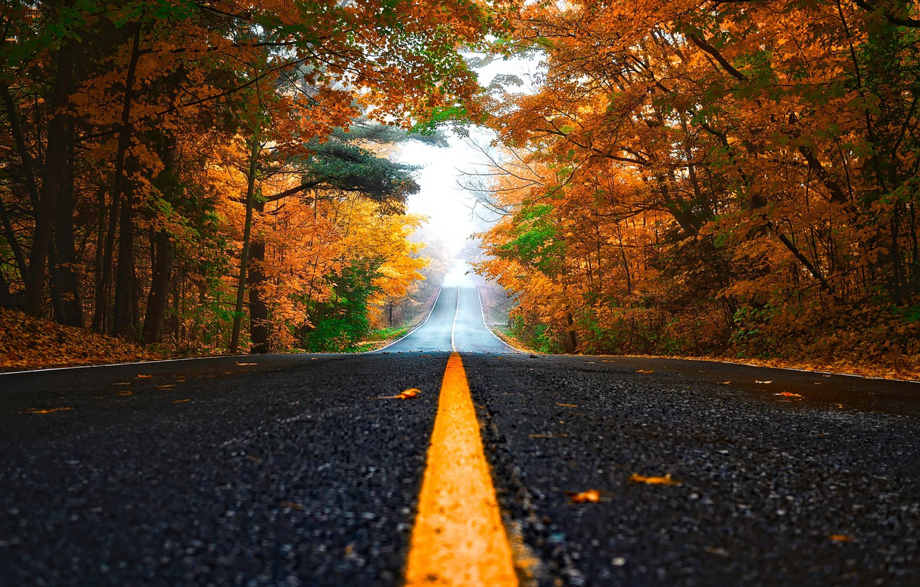 Photo wallpaper road, autumn, forest, trees, fog, yellow