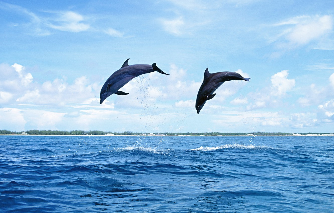 Photo wallpaper sea, the sky, water, Islands, nature, jump, dolphins, mammal