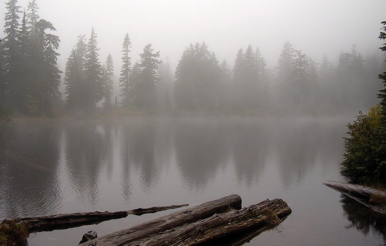 Photo wallpaper forest, water, fog, lake