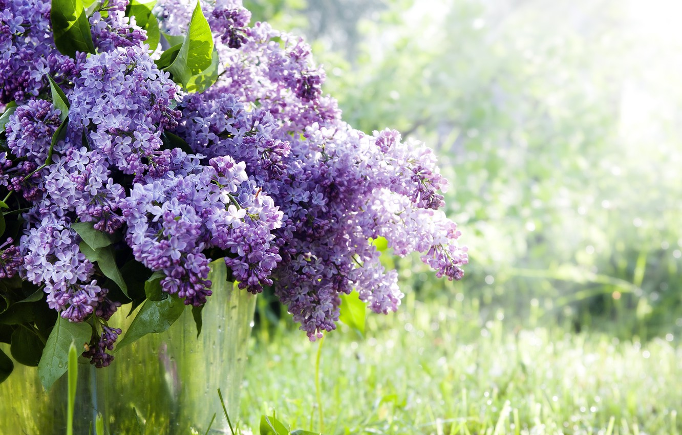 Photo wallpaper grass, flowers, branches, nature, spring, bucket, lilac