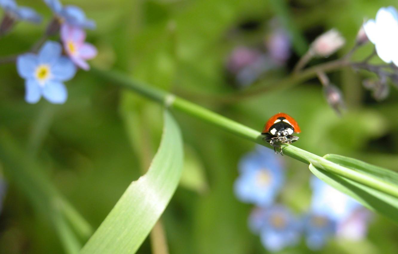 Photo wallpaper green, nature, leaf, bug, Ladybird