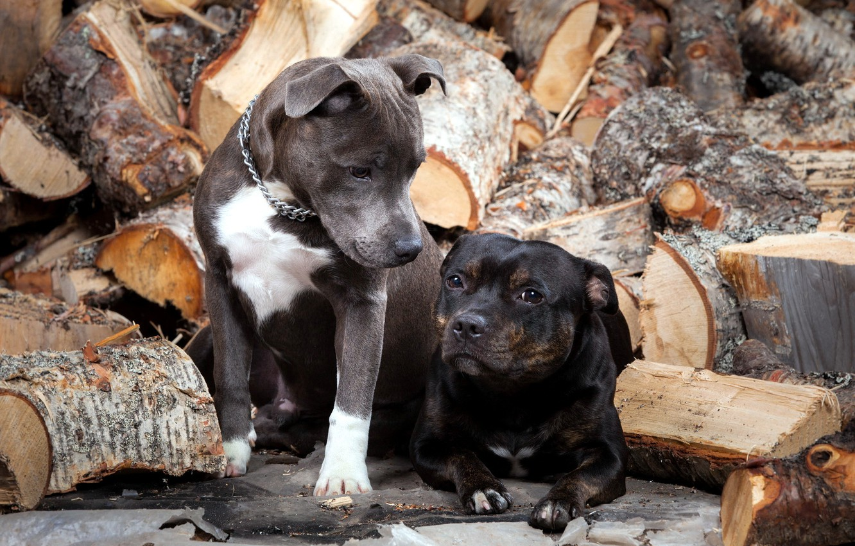 Photo wallpaper dogs, wood, friends
