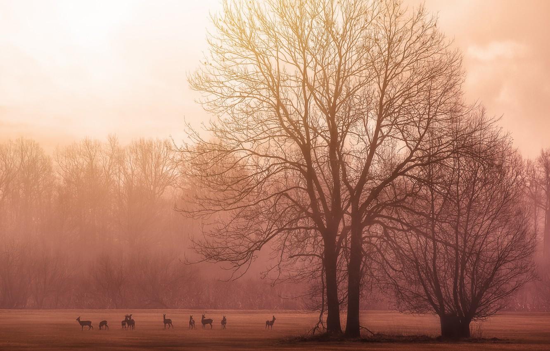Photo wallpaper trees, birds, morning, sunrise, dawn, branches, deer, wildlife, foggy, stove
