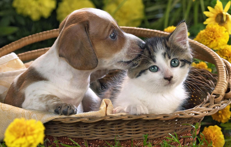 Photo wallpaper flowers, basket, Kitty, puppy