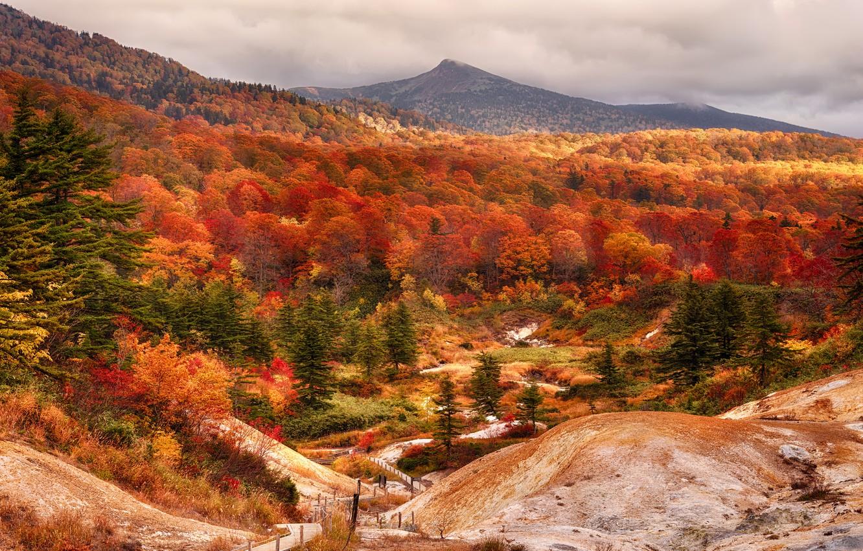 Photo wallpaper autumn, forest, Japan, beech, Akita Prefecture, shirakami mountains