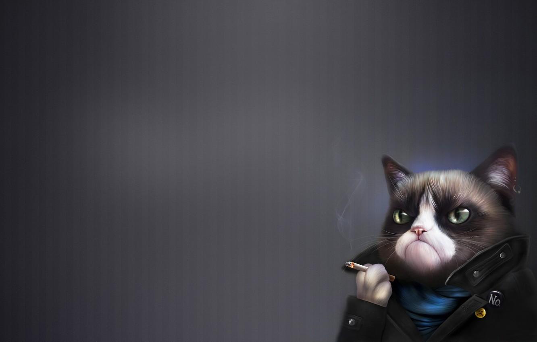 Photo wallpaper Art, Grumpy Cat, Tardar Sauce, Grumpy Cat, Humor