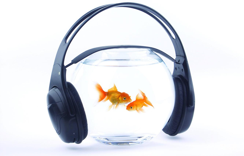 Photo wallpaper water, fish, music, aquarium, headphones, gold