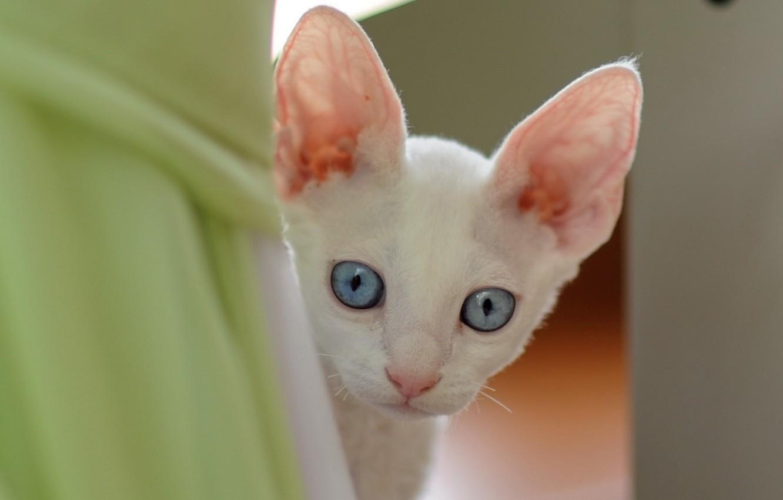 Photo wallpaper eyes, cat, each
