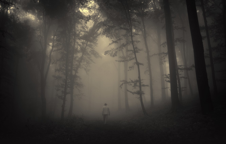 Photo wallpaper road, sadness, forest, trees, landscape, nature, forest, misty, road, trees, landscape, nature, sadness, creepy, creepy, …