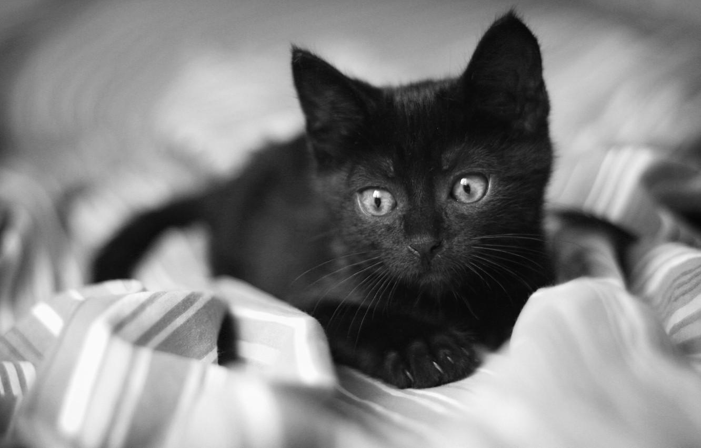 Photo wallpaper eyes, look, kitty, black, blanket, sad