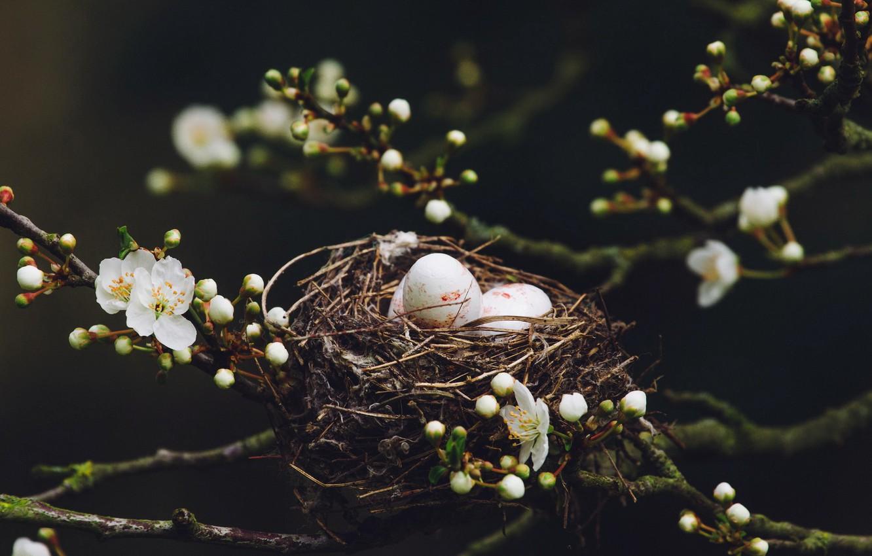 Photo wallpaper nature, spring, socket, eggs