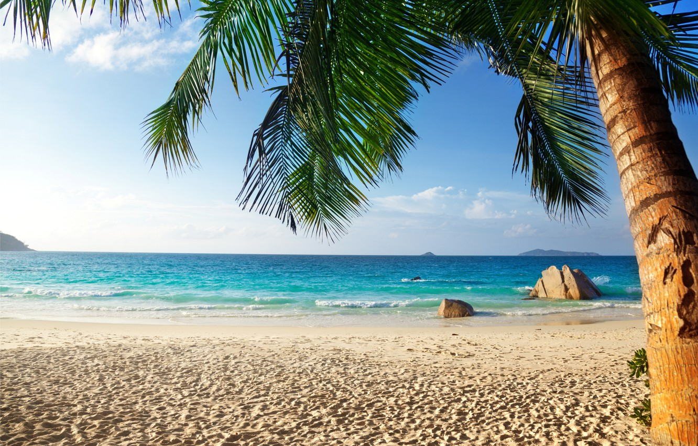 Photo wallpaper sand, sea, beach, tropics, palm trees, shore, summer, beach, sea, ocean, paradise, vacation, palms, tropical