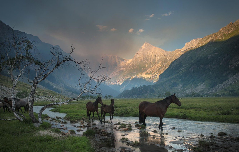 Photo wallpaper grass, mountains, stream, tree, horses, valley, horse, haze, gorge, drink