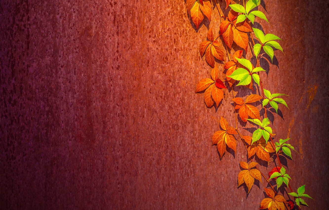 Photo wallpaper leaves, background, wall