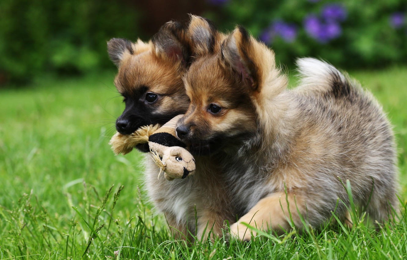 Photo wallpaper dogs, toy, puppies, kids, twins, fun