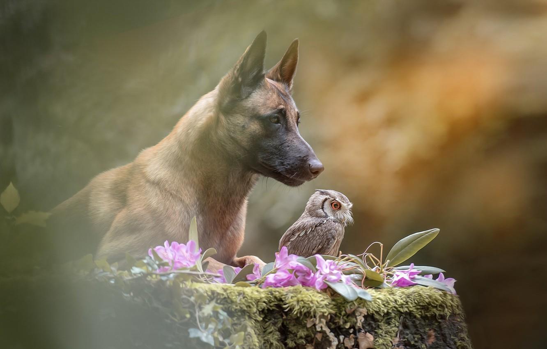 Photo wallpaper flowers, nature, owl, bird, stump, dog, dog