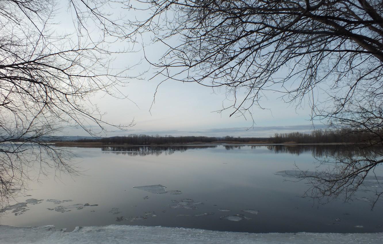 Photo wallpaper ice, trees, nature, island, Spring, Volga