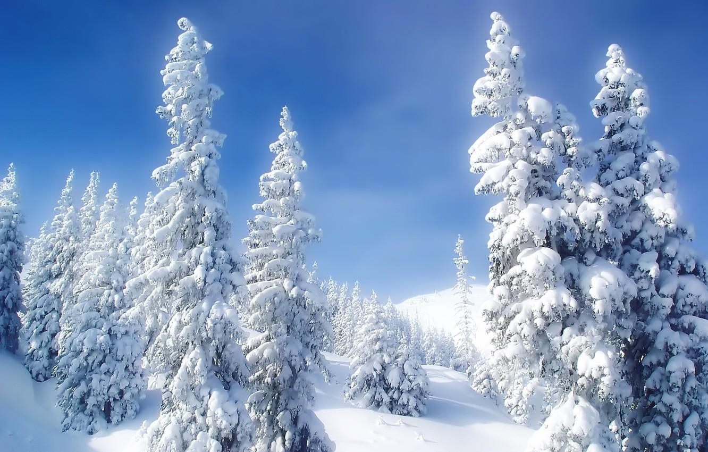 Photo wallpaper cold, winter, snow, tree