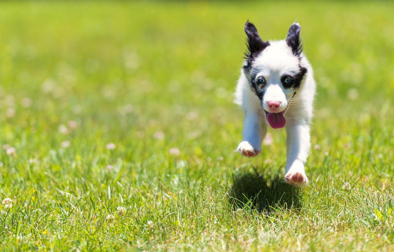 Photo wallpaper field, summer, dog