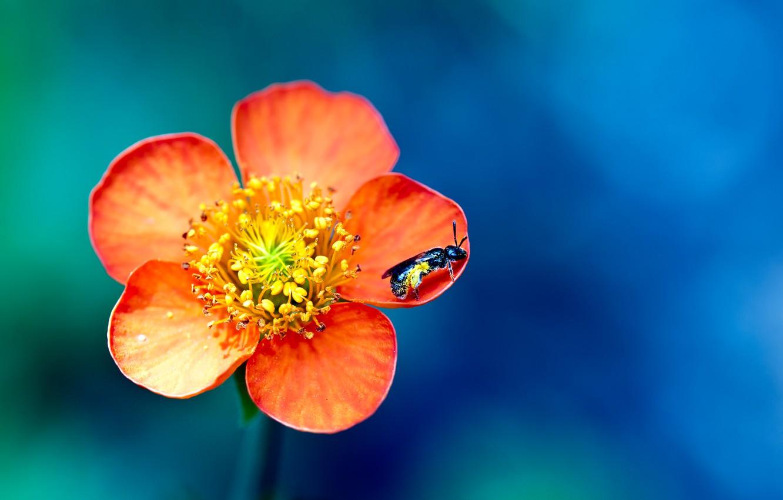 Photo wallpaper flower, macro, paint, OSA, colors, petals, insect, flower, macro, bokeh, bokeh, wasp, 2560x1600, petals, insect