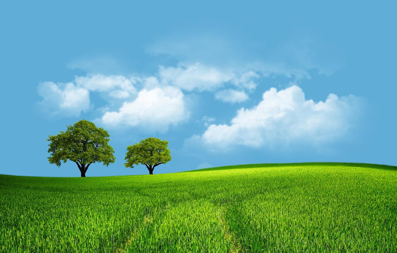 Photo wallpaper field, the sky, trees