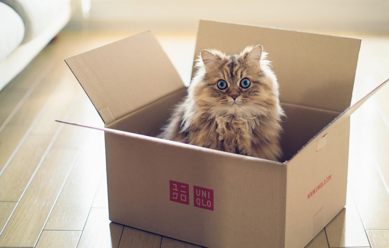 Photo wallpaper cat, box, torode