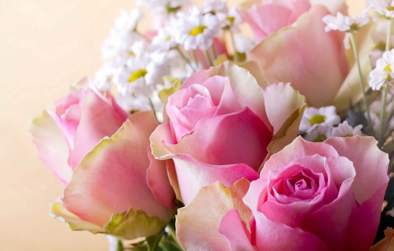 Photo wallpaper background, roses, chamomile, pink