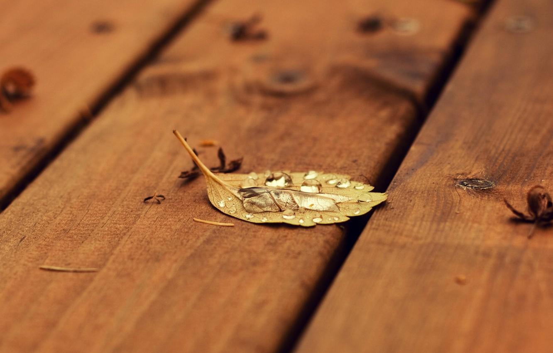Photo wallpaper autumn, sheet, drop