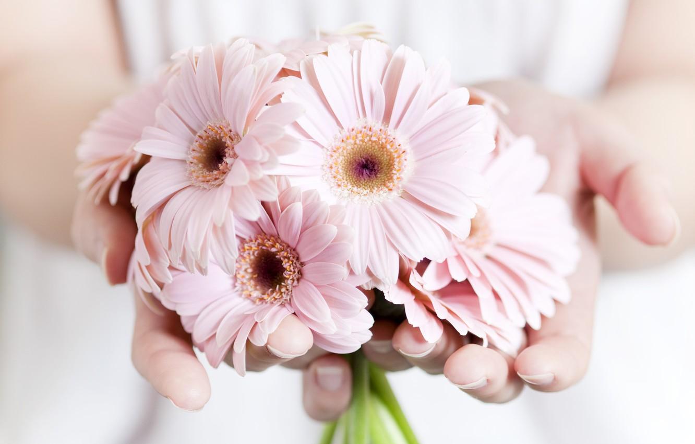 Wallpaper Flowers Plants Hands Pink Images For Desktop