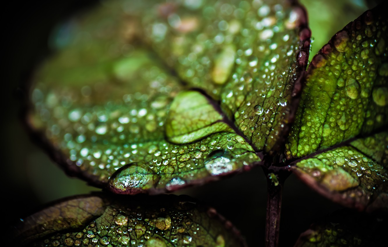 Photo wallpaper drops, blur, Leaves