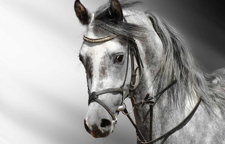Photo wallpaper white, Horse, grey