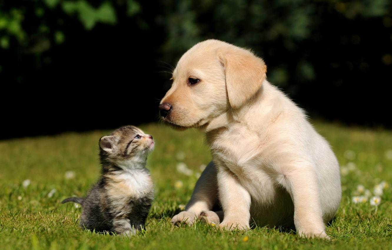 Photo wallpaper grass, kitty, background, dog, Cat, puppy