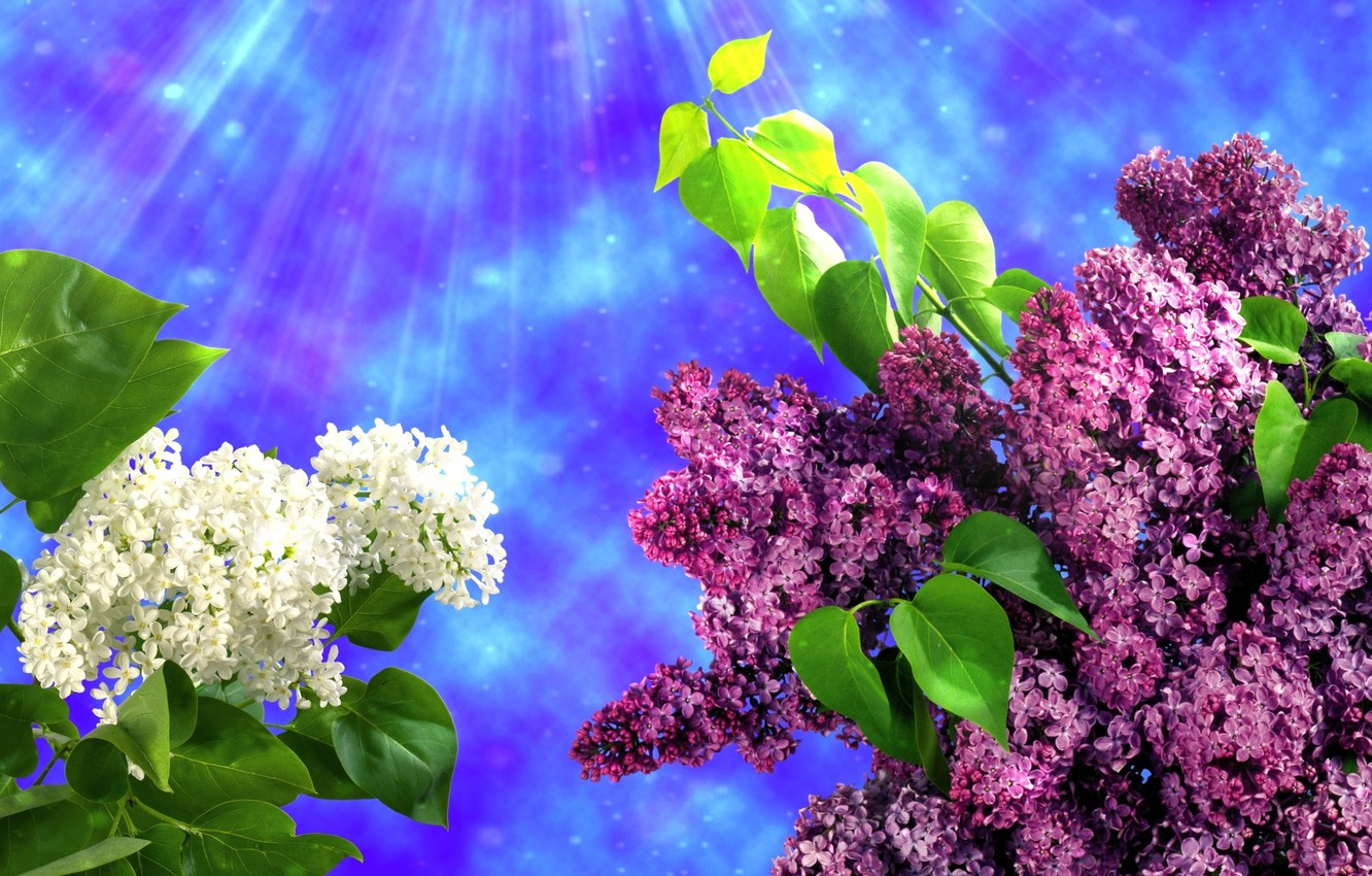 Photo wallpaper flowers, spring, lilac