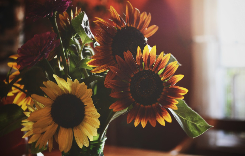 Photo wallpaper flowers, yellow, petals