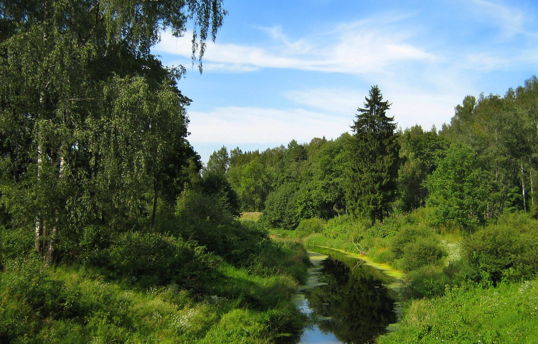 Photo wallpaper the sky, stream, Greens, birch