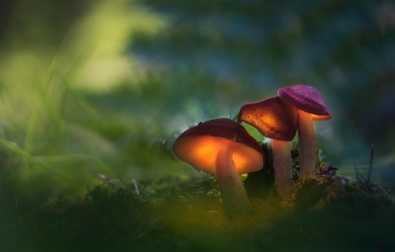 Photo wallpaper forest, macro, light, mushrooms, family