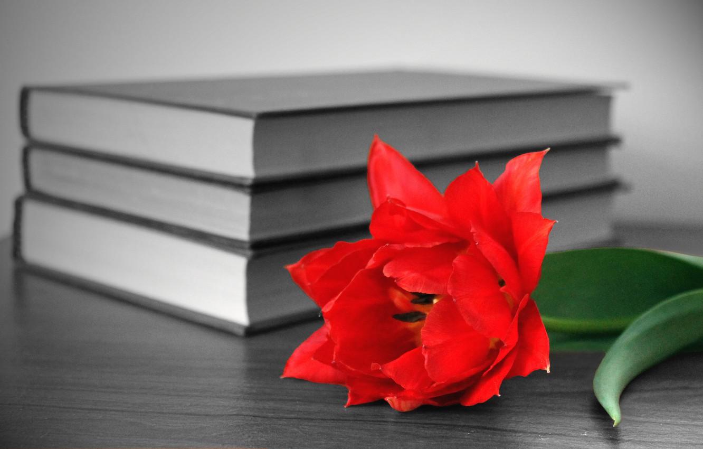 Photo wallpaper flower, red, table, books