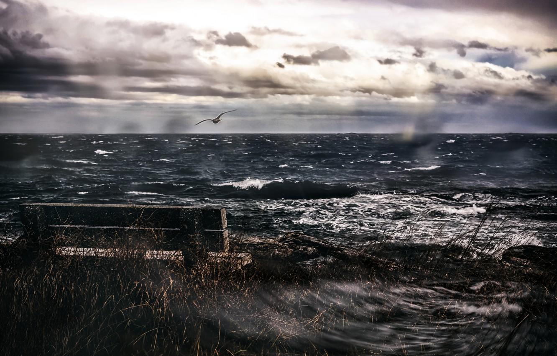 Photo wallpaper sea, bird, bench
