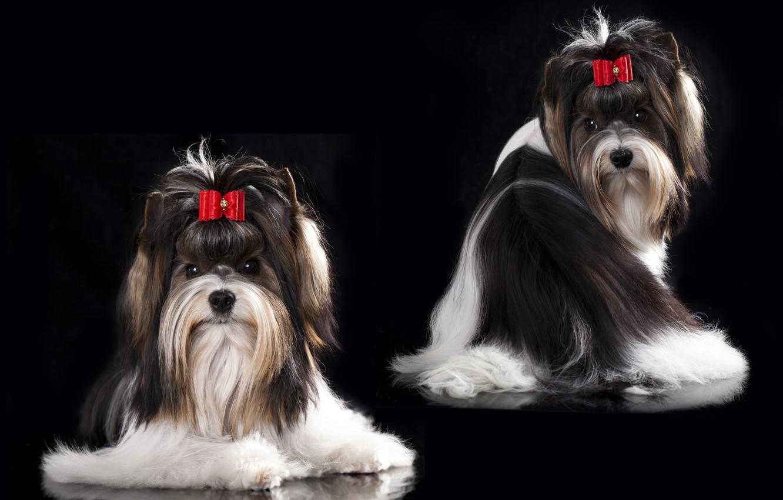 Photo wallpaper dog, girl, girl, bow, barrette, dog, bow, hair clip