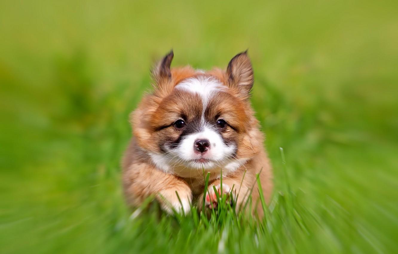 Photo wallpaper background, dog, puppy