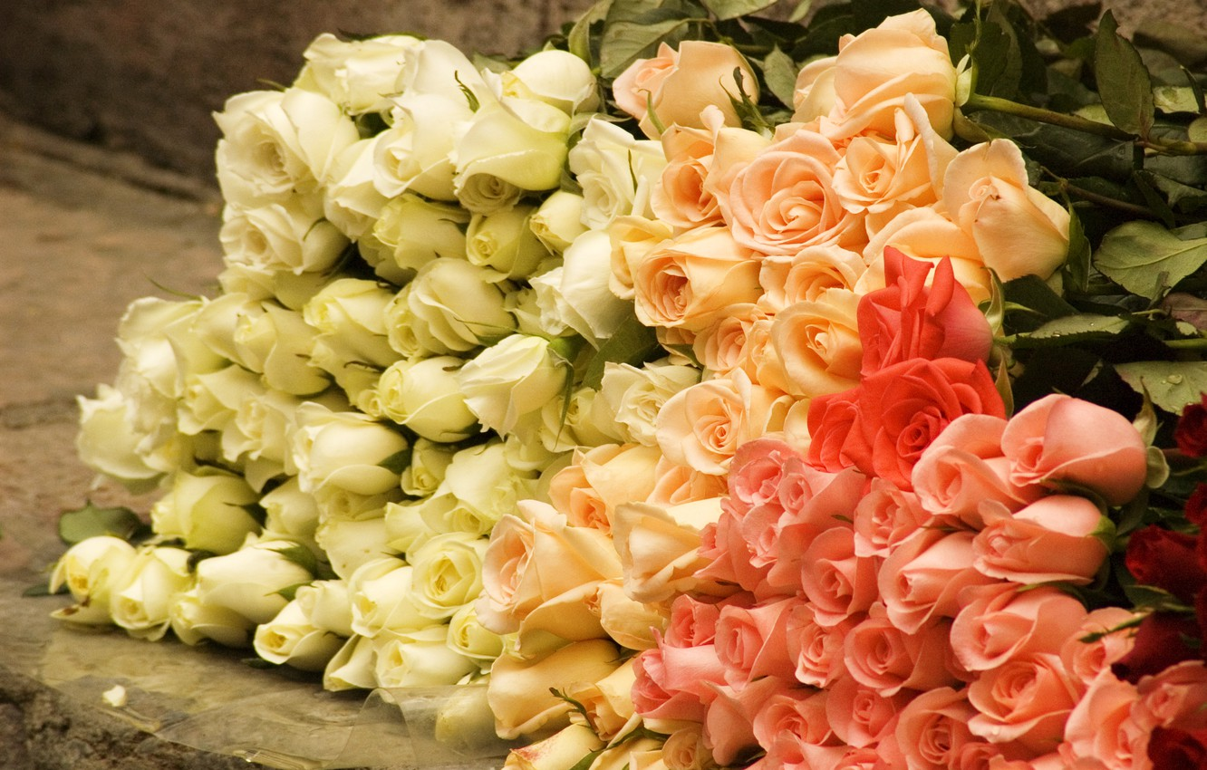 Photo wallpaper flowers, roses, bouquet, rose, buds