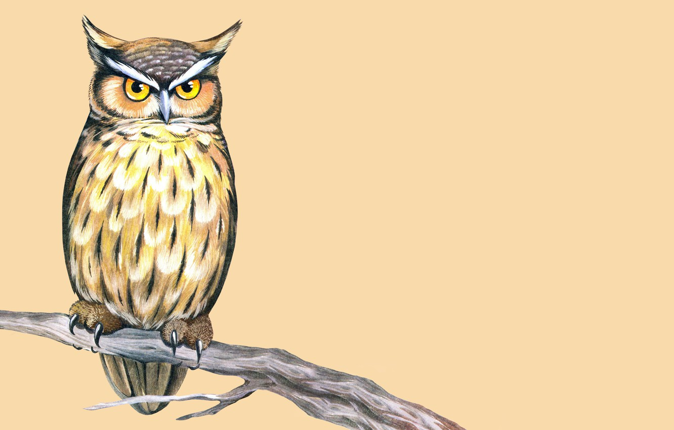 Photo wallpaper owl, bird, branch, painting, light background, owl, wise, cruise